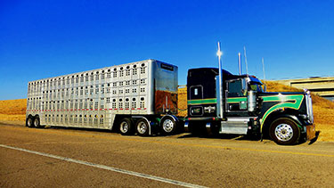 Fatal Crash Involving a Cattle Truck and Vehicle in Stonewall County